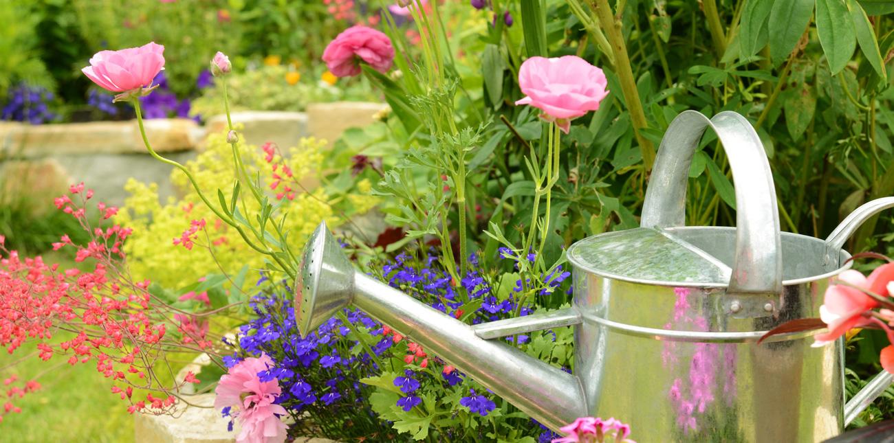Giardinaggio piante da balcone e giardino fiori - Cerco piante da giardino in regalo ...